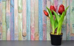 Spring offers in Hotel Medena